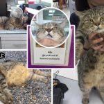 """รู้จักกับ """"พี่คุ้ง"""" อดีตแมวจรสู่พนักงานการไฟฟ้าผู้โด่งดัง จนกลายเป็นขวัญใจชาวสุโขทัย"""
