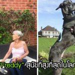 """""""Freddy"""" จากลูกหมาที่เล็กที่สุดของครอก สู่ """"หมาที่ใหญ่ที่สุดในโลก"""" ด้วยความสูง 228 ซม."""
