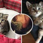 คู่รักช่วยลูกแมวที่ถูกทิ้งบนถนน แต่โดนขโมยหัวใจโดยไม่รู้ตัว จึงรับเลี้ยงมันในที่สุด