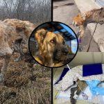 สุนัขถูกทิ้งให้เผชิญหน้ากับความตาย หลังจากที่ไม่สามารถมีลูกให้นายทุนได้อีกต่อไป