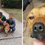 สุนัขถูกมัดไว้หลังบ้านรอดจากความหิวโหย หลังมีเด็กชาย 4 คน เข้ามาช่วยไว้ได้ทันเวลา
