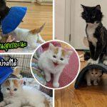 """แมวแม่ลูกอ่อนขู่ """"ลูกแมวกำพร้า"""" ที่ทาสพามาให้ มิ้วน้อยจึงตามตื๊อจนได้รับการยอมรับ"""