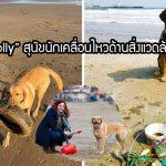 """""""Molly"""" สุนัขใส่ใจสิ่งแวดล้อม ออกไปเก็บขยะที่ชายหาดทุกวันเพื่อให้โลกน่าอยู่มากขึ้น"""