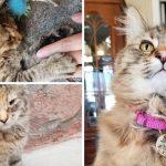 สาวช่วย 'ลูกแมวจร' ที่อยู่ลำพังในลานจอดรถ และเปลี่ยนให้มันเป็น 'เหมียวผู้สง่างาม'
