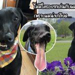 น้องหมาปากแหว่งเพดานโหว่ มีชีวิตที่แฮปปี้สุดๆ หลังเข้ารับการผ่าตัดถึง 3 ครั้งใน 3 เดือน