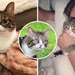 ลูกแมวจรเร่ร่อนหาเศษอาหารประทังชีวิต ฝันเป็นจริงเมื่อคู่รักมอบบ้านหลังสุดท้ายให้