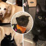 """""""ลูกแมวกำพร้า"""" ถูกรับเลี้ยงโดยครอบครัวที่มีสุนัข มันจึงตัดสินใจจะเป็นหมาด้วยเหมือนกัน"""