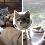 ลูกแมวถูกแม่ทิ้ง เดินเข้าไปหาคู่รักในโรงนา แล้วยัดเยียดความเป็นทาสให้จนสำเร็จ