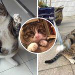 """พบกับ """"Ah Fei"""" แมวอ้วนจอมดราม่า จะทำอะไรต้องเล่นหน้าเล่นตา แอคติ้งโอเวอร์ไว้ก่อน"""