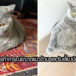 """""""แมวอ้วน"""" ถูกเจ้าเก่าส่งไปฆ่าเพราะป่วย แต่หมอได้ช่วยเอาไว้พร้อมมอบชีวิตใหม่ให้"""
