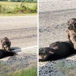 """""""สุนัขแสนดี"""" นั่งเฝ้าร่างไร้วิญญาณของน้องสาวที่ถูกรถชนตาย จนกระทั่งมีคนมาช่วยเหลือ"""