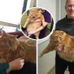 """""""แมวอ้วน"""" สูญเสียเจ้าของไป """"อดีตหญิงเคยอ้วน"""" จึงรับเลี้ยงและมุ่งมั่นช่วยมันลดน้ำหนัก"""