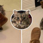 คุณแม่รับเลี้ยงแมวที่ถูกมองข้ามนานนับปี มันจึงเซอร์ไพรส์ด้วยการคาบรองเท้ามาให้เธอทุกเช้า