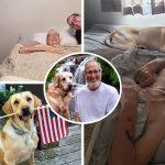 สุนัขผู้ซื่อสัตย์สุขภาพแย่ลงเมื่อรู้ว่าเจ้าของป่วย ก่อนที่ทั้งคู่จะเสียชีวิตห่างกันเพียงชั่วโมงครึ่ง
