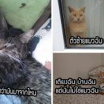 ชาวเน็ตผุดแฮชแท็ก #บ้านฉันแต่ไม่ใช่แมวฉัน หลังมีแมวแปลกหน้าบุกเข้ามาในบ้าน