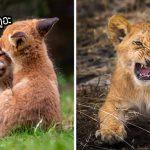 """ช่างภาพหนุ่มพาไปชม """"ลูกสัตว์ป่าตัวน้อย"""" ที่ดูไร้เดียงสาและมีพฤติกรรมน่าสนใจจนต้องหลงรัก"""
