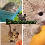 19 ภาพลูกแมวตัวจิ๋ว มีความน่ารัก น่ากอด จนสามารถใช้ในการบำบัดโรคต่างๆ ได้