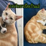 แมวส้มร้องไห้ไม่หยุดหลังเสียลูกๆ ไป แต่แล้วมันก็สงบลงเมื่อได้เป็นแม่ให้ลูกหมากำพร้า