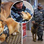 """""""นุ้งคอร์กี้ผู้น่ารัก"""" ประกาศเกษียณจากการเป็นสุนัขตำรวจ หลังรับใช้ชาตินานถึง 7 ปี"""