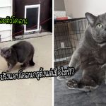 ทาสสาวมึนตึ๊บ! เมื่อพบว่าแมวของเธอมีตัวโคลน ที่เหมือนกันเด๊ะจนแยกไม่ออก