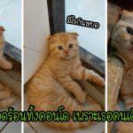 วุ่นทั้งคอนโดเมื่อทาสคิดว่าแมวของเขาหายไป ก่อนจะพบมันหลับเป็นตายอยู่ในห้อง