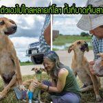 ลูกหมาบาดเจ็บจนขาหลังใช้ไม่ได้ ลากตัวเองไปไกลหลายกิโลฯ เพื่อขอความช่วยเหลือ