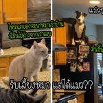 ครอบครัวรับเลี้ยงสุนัข แต่กลับได้แมวมาแทน เพราะเจ้าตูบดันคิดว่าตัวเองเป็นแมว…