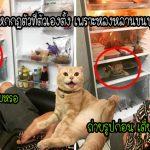 คุณตานั่งดูแมวเปิดตู้เย็นแถมถ่ายรูปมันด้วย ทั้งๆ ที่เขาเป็นคนสั่งห้ามไม่ให้แมวเข้าตู้เย็น