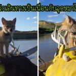 หนุ่มช่วยลูกหมาป่าจากการจมน้ำ เขาจึงได้เป็นเพื่อนกับมันและล่องแพด้วยกันเป็นเวลา 10 วัน