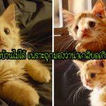 """ลูกแมวถูกปฏิเสธเพราะ """"น่าเกลียดเกินไป"""" ในที่สุดมันก็ได้เจอคนที่รักในสิ่งที่มันเป็น"""
