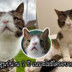 """คู่รักรับเลี้ยง """"แมวหน้าแปลก"""" ที่ไม่มีใครต้องการ ล่าสุดนางกลายเป็นเซเลบที่มีแฟนคลับเพียบ"""