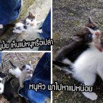 ลูกแมวแรกเกิดถูกคนใจร้ายไปปล่อยในที่รกร้าง เอาแต่ร้องหาแม่จนมีคนใจดีไปช่วยเหลือ