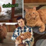 """""""แมวจร"""" ได้รับชีวิตใหม่ หลังรวบรวมความกล้าเดินเข้าบ้านชายหนุ่มที่เคยให้อาหารมัน"""