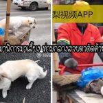 """ป้ากวาดถนนซื้อ """"หมาพิการ"""" มาเลี้ยง 5 ปีต่อมามันตอบแทนด้วยการช่วยเธอจากความตาย"""