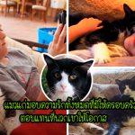 """ครอบครัวรับเลี้ยง """"แมวแก่วัย 20 ปี"""" เพื่อทำให้มันมีความสุขในช่วงบั้นปลายของชีวิต"""
