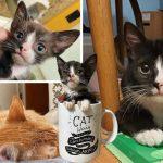 """""""ลูกแมวจิ๋ว"""" มีปัญหาสุขภาพมากมาย แต่เพราะความรัก มันจึงเติบโตเป็นแมวที่สง่างาม"""