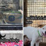 สัตว์จากศูนย์ฯ ตื่นเต้นสุดๆ เมื่อได้ไปทัศนศึกษาเพื่อพบปะเพื่อนแปลกใหม่ในสวนสัตว์