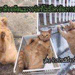 """""""เฮง เฮง"""" อดีตแมวจรถูกรับเลี้ยงโดยไม่ได้ตั้งใจ ก่อนจะถูกปั้นเป็นเซเลบตัวกลมผู้โด่งดัง"""