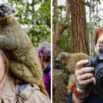 แก๊งลีเมอร์ต้อนรับนักท่องเที่ยวอย่างเป็นมิตร สร้างความตระนักเกี่ยวกับการอนุรักษ์สัตว์